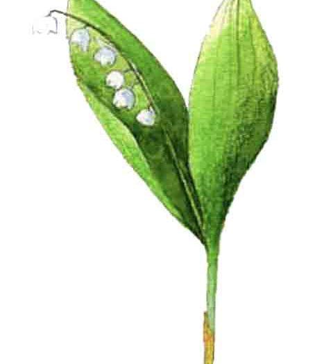 44ème liste :  L'odeur du jardin potager