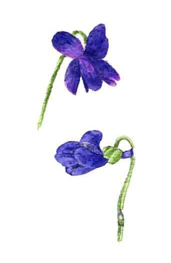 48ème liste :  L'odeur des violettes