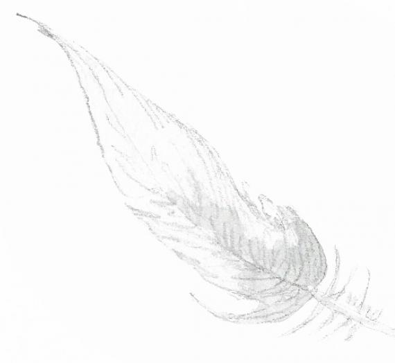 80ème liste :  Un duvet de plumes