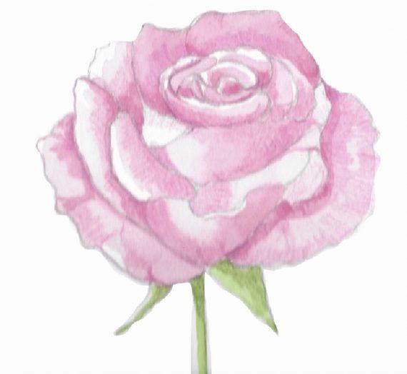 90ème liste :  Les roses