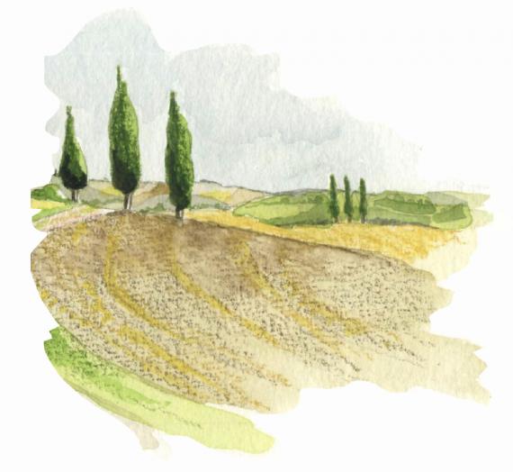99ème liste :  Une allée de cyprès